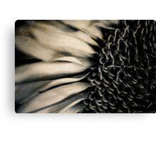 Sunflower Mono Canvas Print