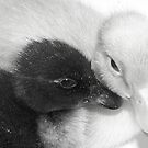 Ducky Love by Tracey Hampton
