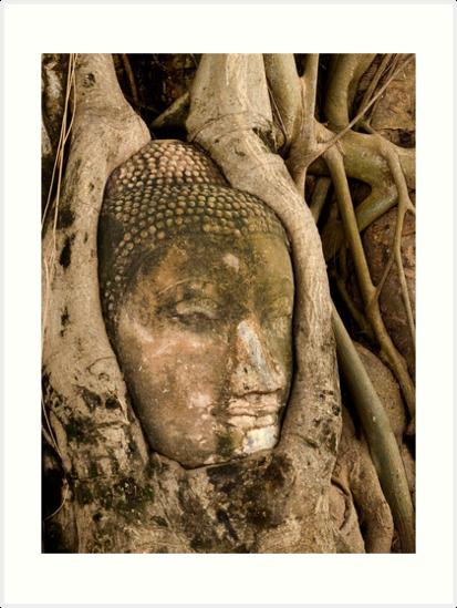 Budda Head in Roots by Dan Sweeney