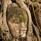 Budda Head in Roots by Dan Sweeney