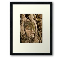Budda Head in Roots Framed Print