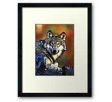 Grey's Gaze Framed Print