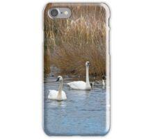 Tundra Swans iPhone Case/Skin