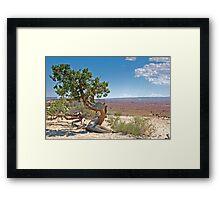 Juniper tree Framed Print