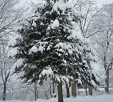Up to 18 inches of snow overnight by James Gibbs