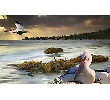1098-Pacific Pelicans Sunset Photographic Print