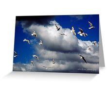 Windsailing Seagulls © Vicki Ferrari Photography Greeting Card