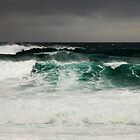 Royal National Park, NSW, Australia | June 2008 by Benn Hartung