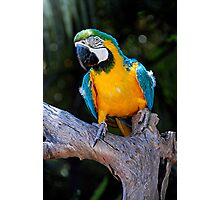 Macaw Adelaide Zoo Photographic Print