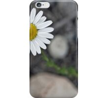 Daisy Blooming in the Rocky Mountains iPhone Case/Skin