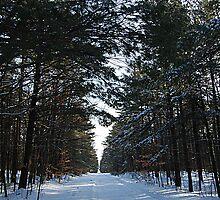 Woodland Walking Trail by Joanne  Bradley