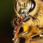 Bee's Tongue by Darren Post