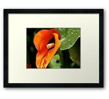 Orange Lily 2 Framed Print