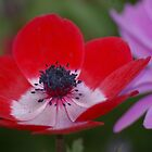 Pincushion Poppy by Tammy Roberts