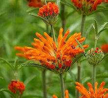Red, Green and Orange by Angus McLaren