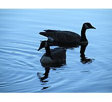 Evening Swim with Geese Photographic Print