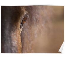Equine #1 Poster