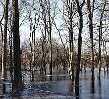 Flooding In The Central Plains by Jarede Schmetterer