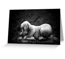 Softness in stone 2 Greeting Card