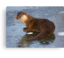 Otterly Freezing! Canvas Print