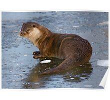 Otterly Freezing! Poster