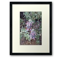 Softly Sage Framed Print