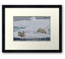 Polar Play Time Framed Print