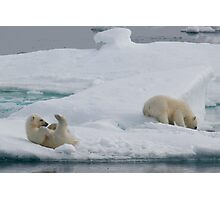 Polar Play Time Photographic Print