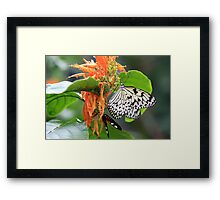 Tree Nymph and Postman  Framed Print