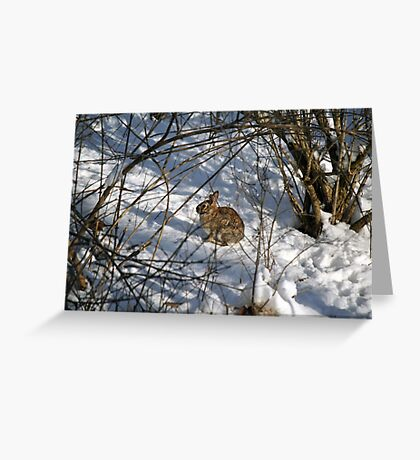 I refuse to deliver eggs under these conditions! Greeting Card