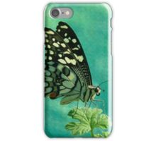 Butterfly at rest iPhone Case/Skin