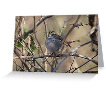 Big Little Bird Greeting Card
