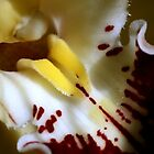 Do you like flowers? by sstarlightss