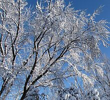 Snow Covered Trees Photograph Square by Adri Turner