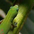 Gecko by Hannah Fenton williams