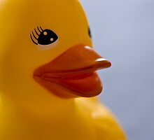 ducky glamour shot by Yvonne Roberts