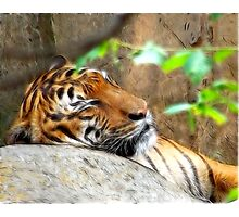 Fractalius Tiger Photographic Print