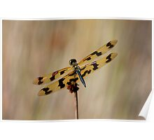 Graphic Flutterer Dragonfly - Rhyothemis graphiptera Poster