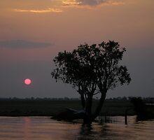 Chobe Sunset by Jan  Saggers
