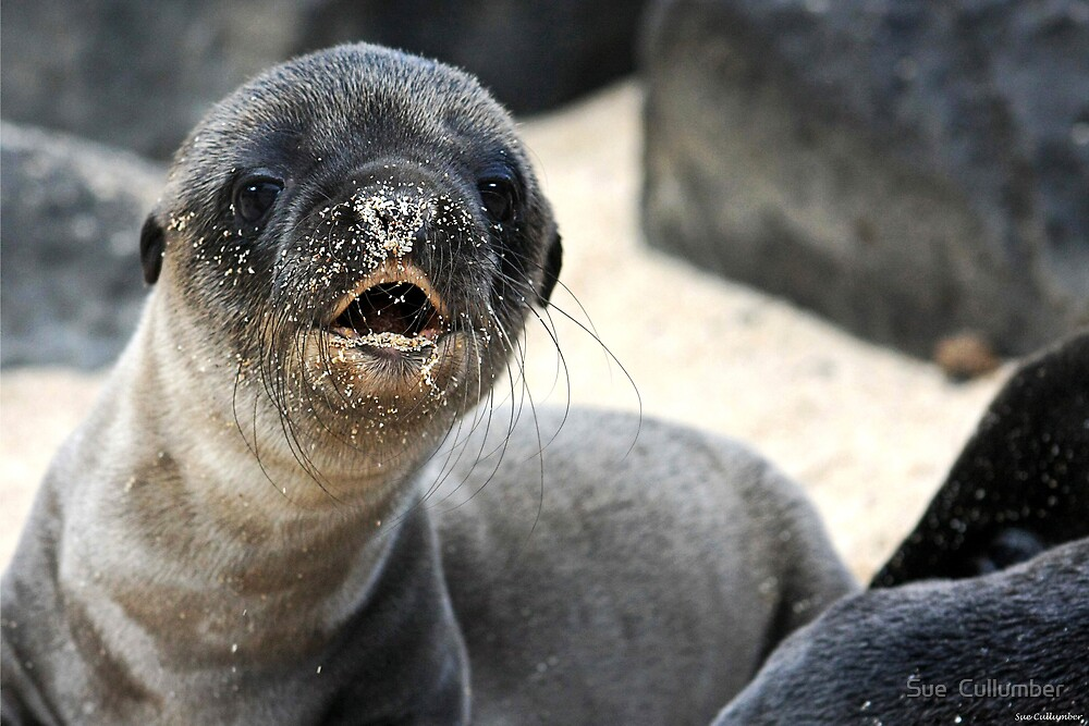 Are you my mommy? by Sue  Cullumber