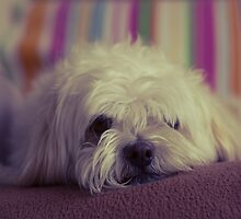 Lazy Pooch by fatalcyde