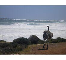 Ostrich Gazing Photographic Print