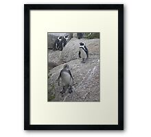 Curious Penguin Framed Print
