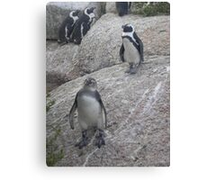 Curious Penguin Canvas Print