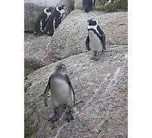 Curious Penguin Photographic Print