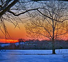 """Last Winter Fling Just Before Spring"" by Melinda Stewart Page"
