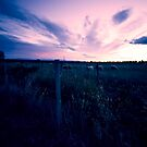Fading light over pasture near Rangiora by Elaine Stevenson