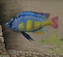 Victorian Cichlid by Rebecca Wang