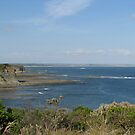 Bunurong Marine and Coastal Park  by Jacqueline  Murphy