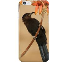 Nectar eating Amethyst Sunbird iPhone Case/Skin